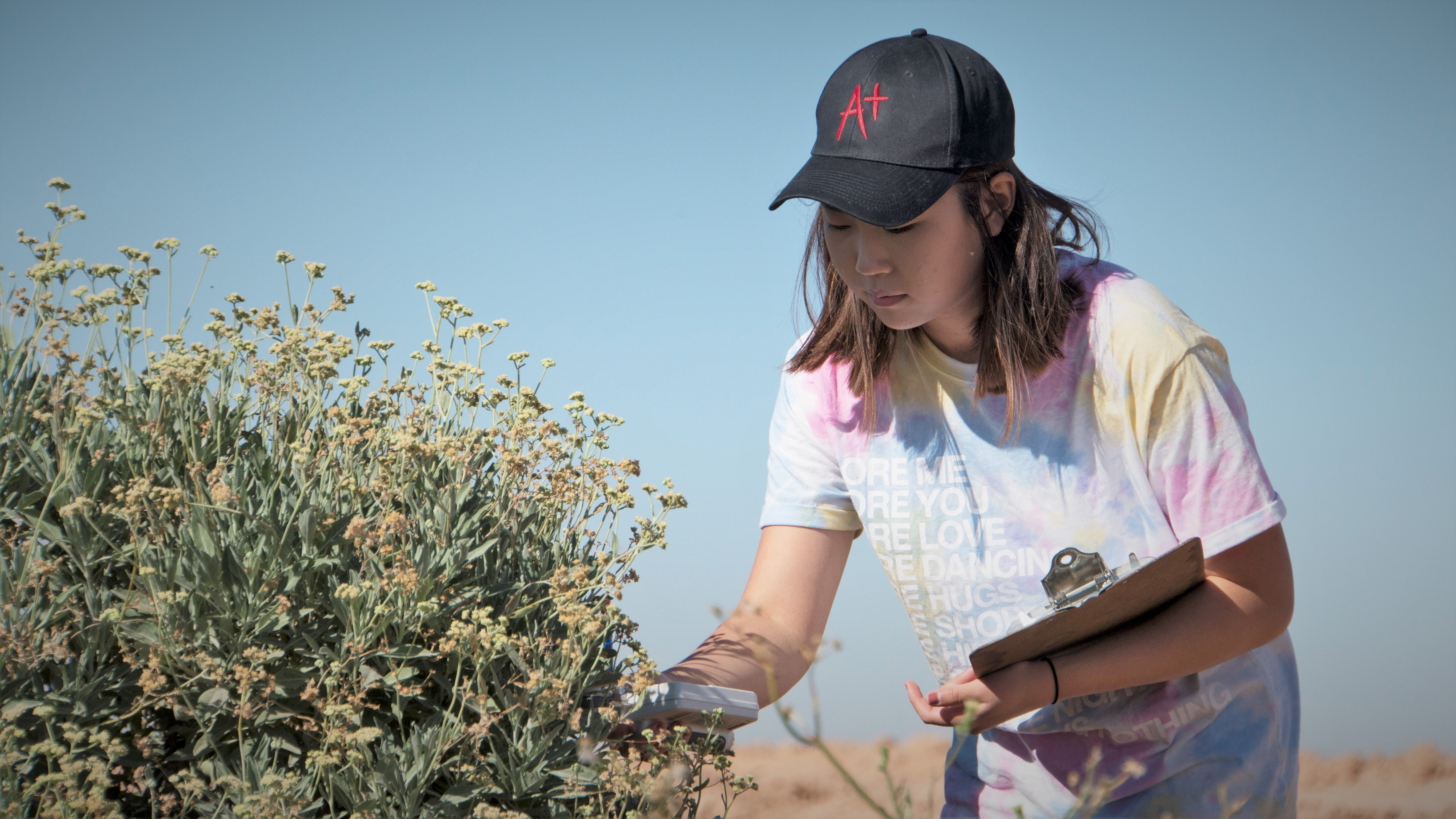 collecting phenotype data from Guayule