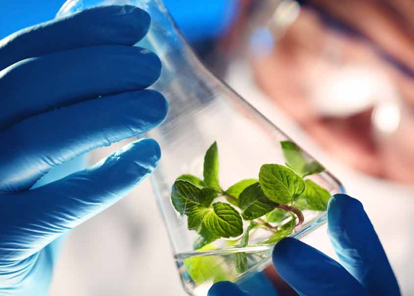Biological/Physical Sciences & Agriculture
