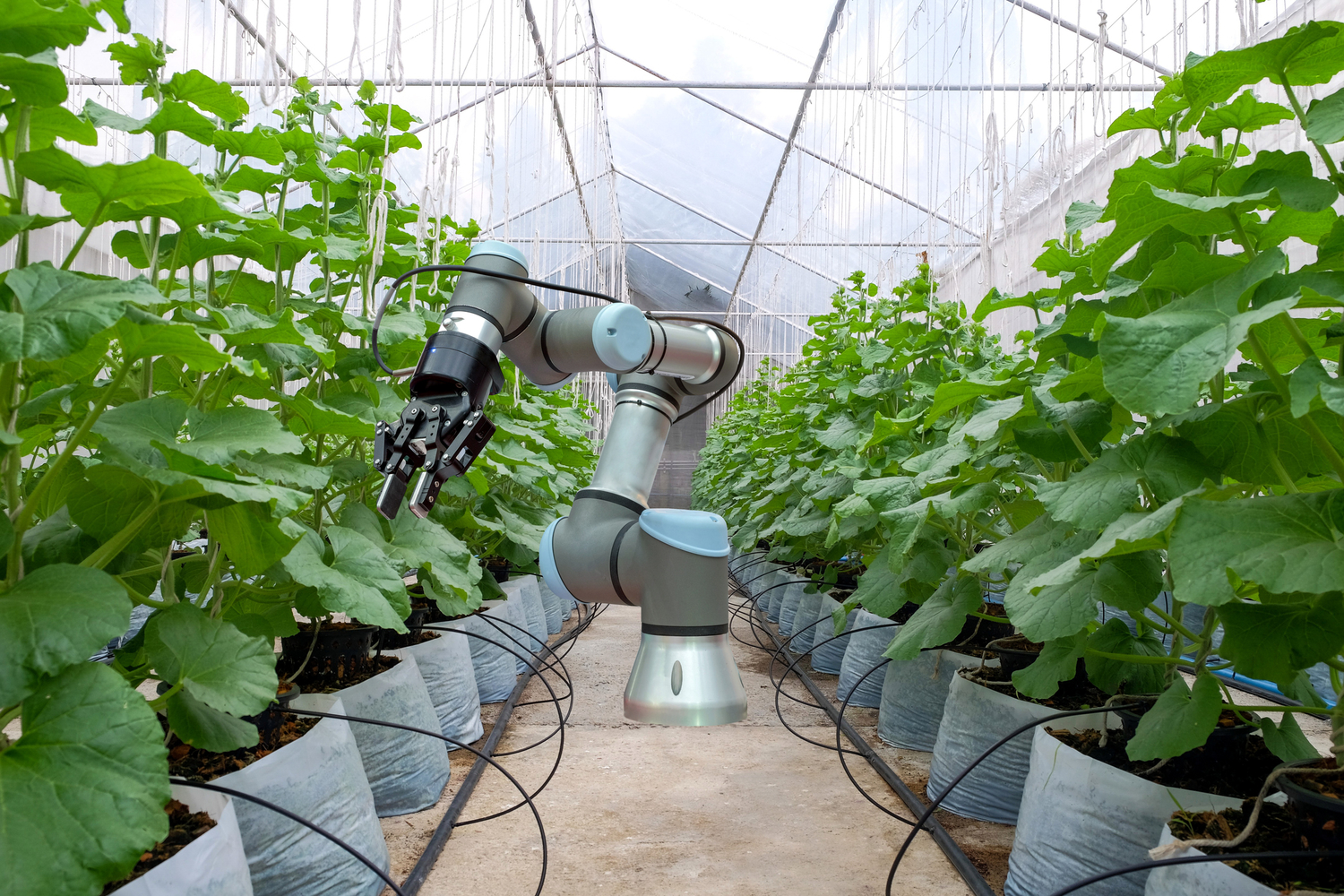 Robot working in greenhouse/nursery
